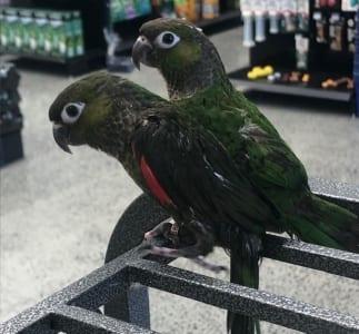 The Pet Place - Befriending Birds