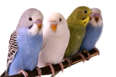 The Pet Place - Birds