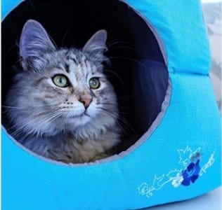 The Pet Place - Comprehending Cats